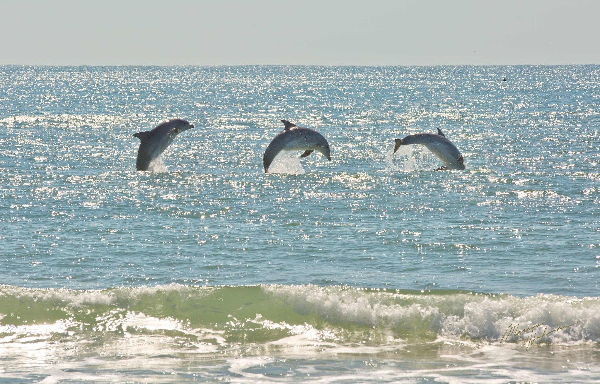 Chesapean Kayak With Dolphins Eco